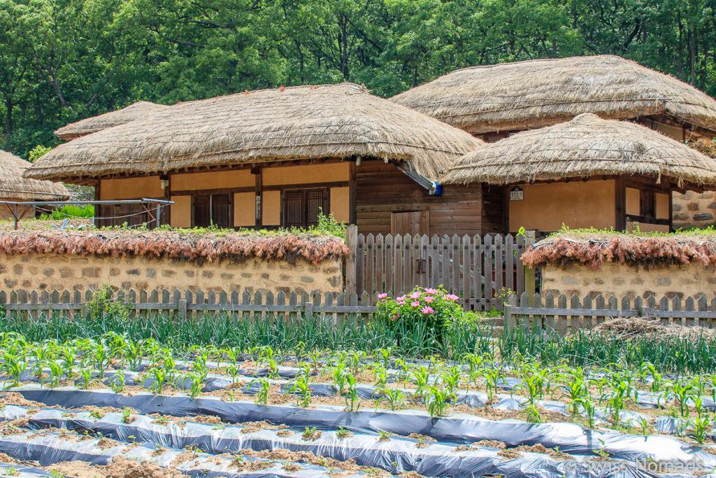 Strohdächer im Yangdong Folk Village