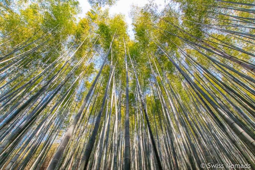 Bambus Wald in Daehan Dawon in Südkorea