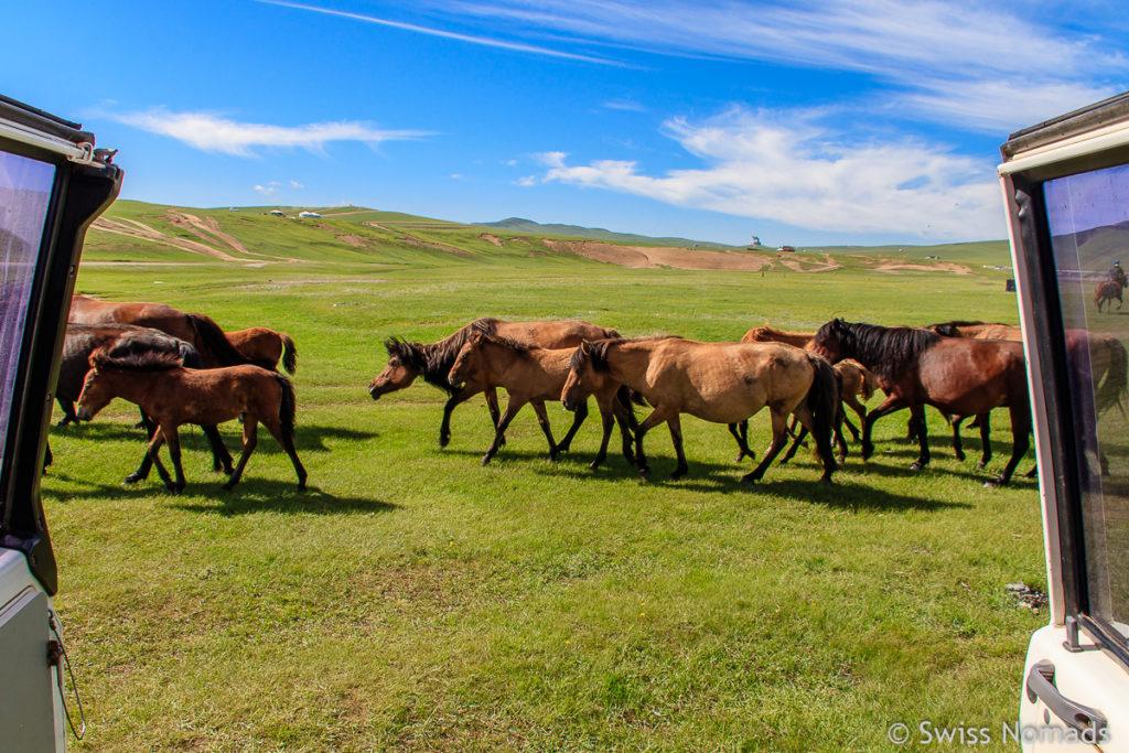 Unsere ersten Eindrücke aus der Mongolei Pferde