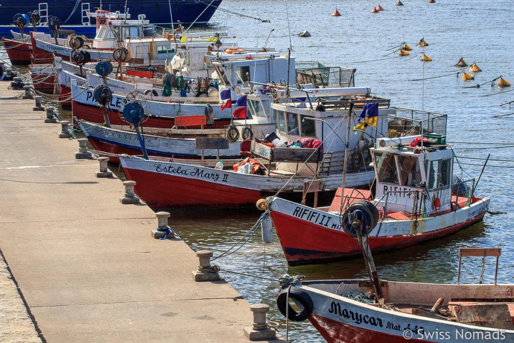 Fischerei Flotte Punta del Este