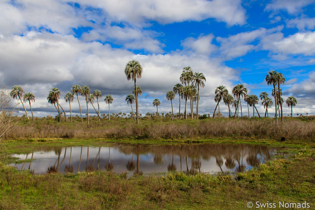 El Palmar Landschaft Lagune