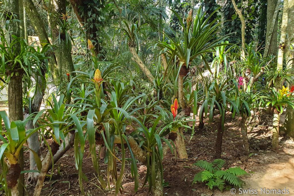 Garten Parque das Aves Brasilien