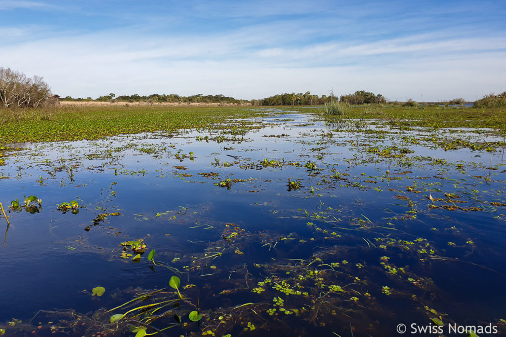 Sumpflandschaft Ibera