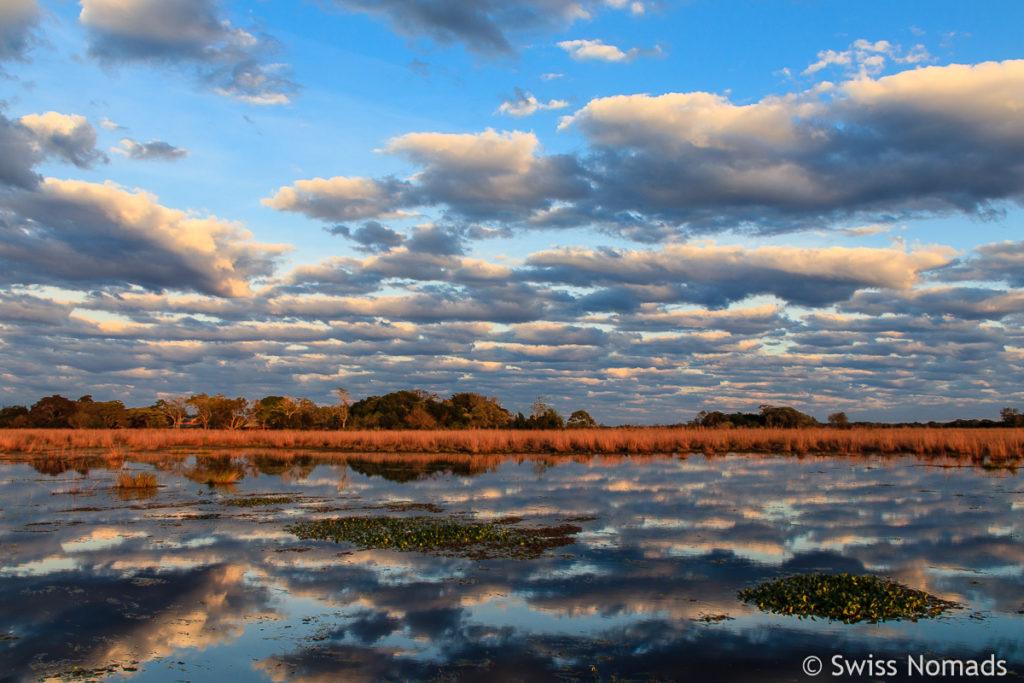 Sumpflandschaft Ibera Argentinien