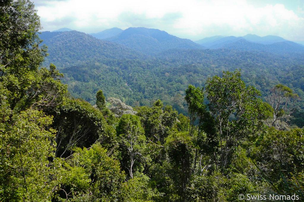 Aussicht Urwald Taman Negara