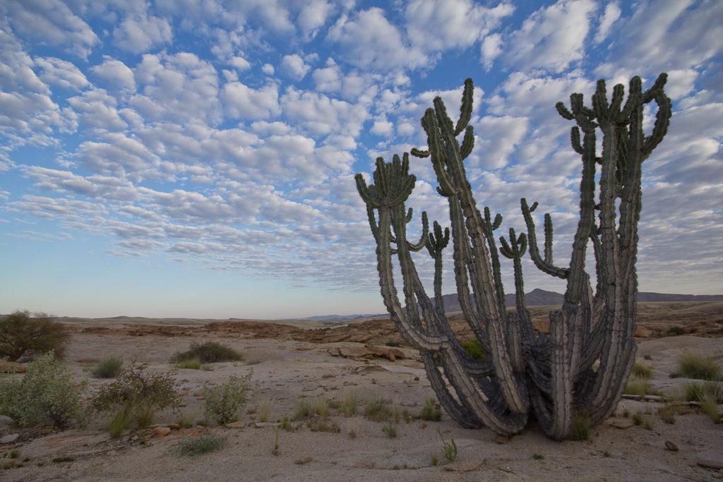 Blutkuppe mit Kaktus in Namibia