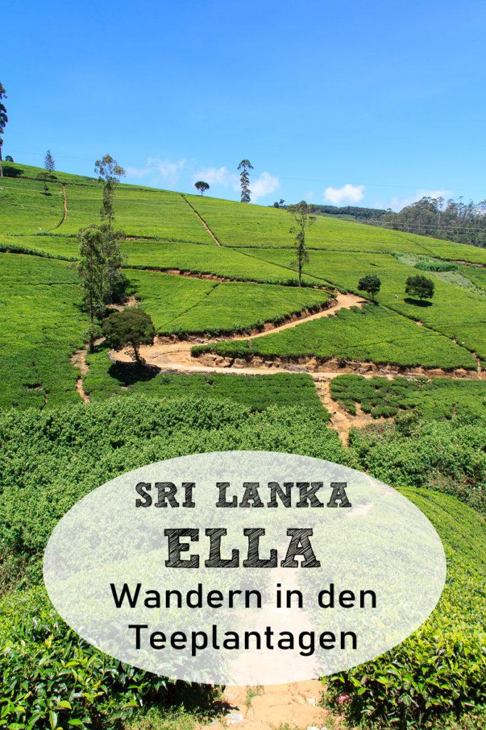 Ella Teeplantagen Wandern