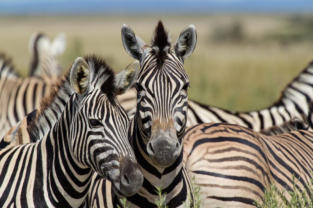 Tiere im Etosha Nationalpark Namibia