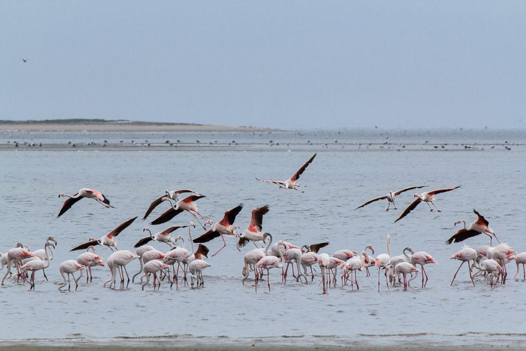 Flamingos in Namibias Norden