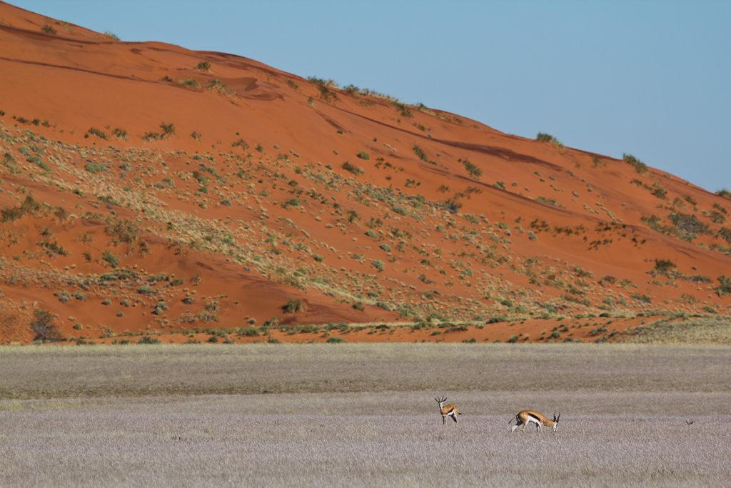 Sand Düne in der Namtib Wüste