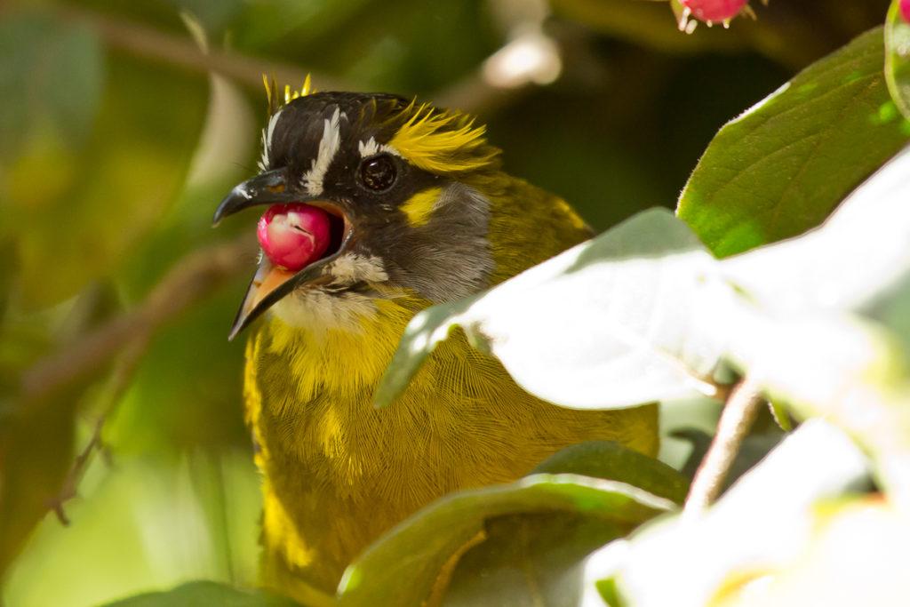 Vogelbeobachtung in Nuwara Eliya