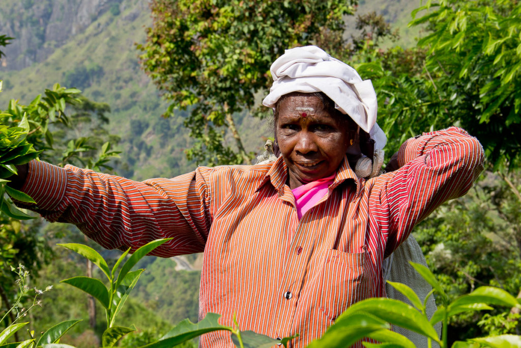 Tee Pflückerin bei Ella in Sri Lanka