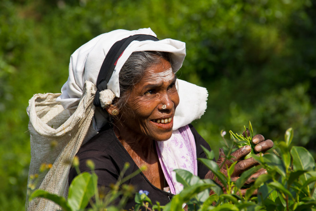 Tee Plantage Pflückerin Sri Lanka