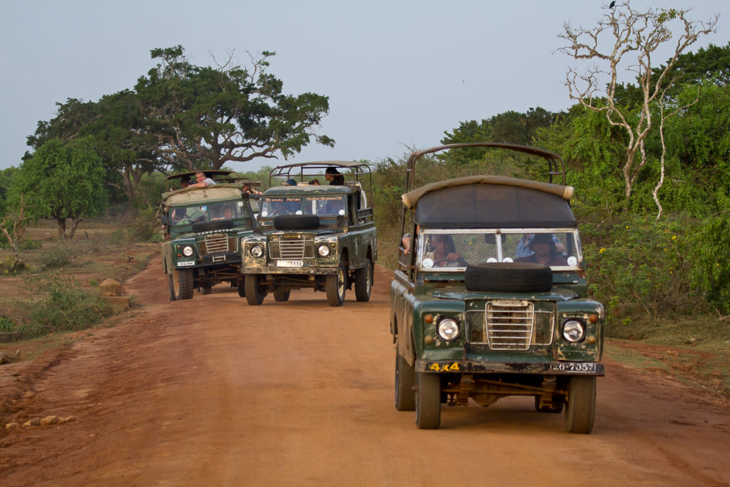 Safari im Yala Nationalpar in Sri Lanka