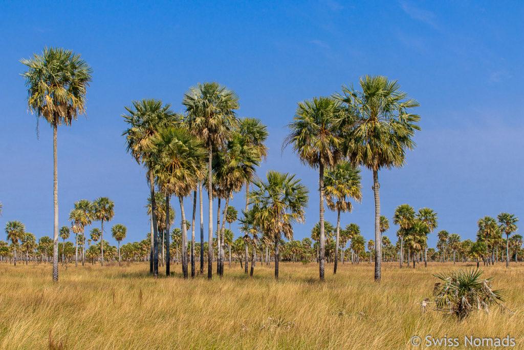 Der Gran Chaco in Argentinien