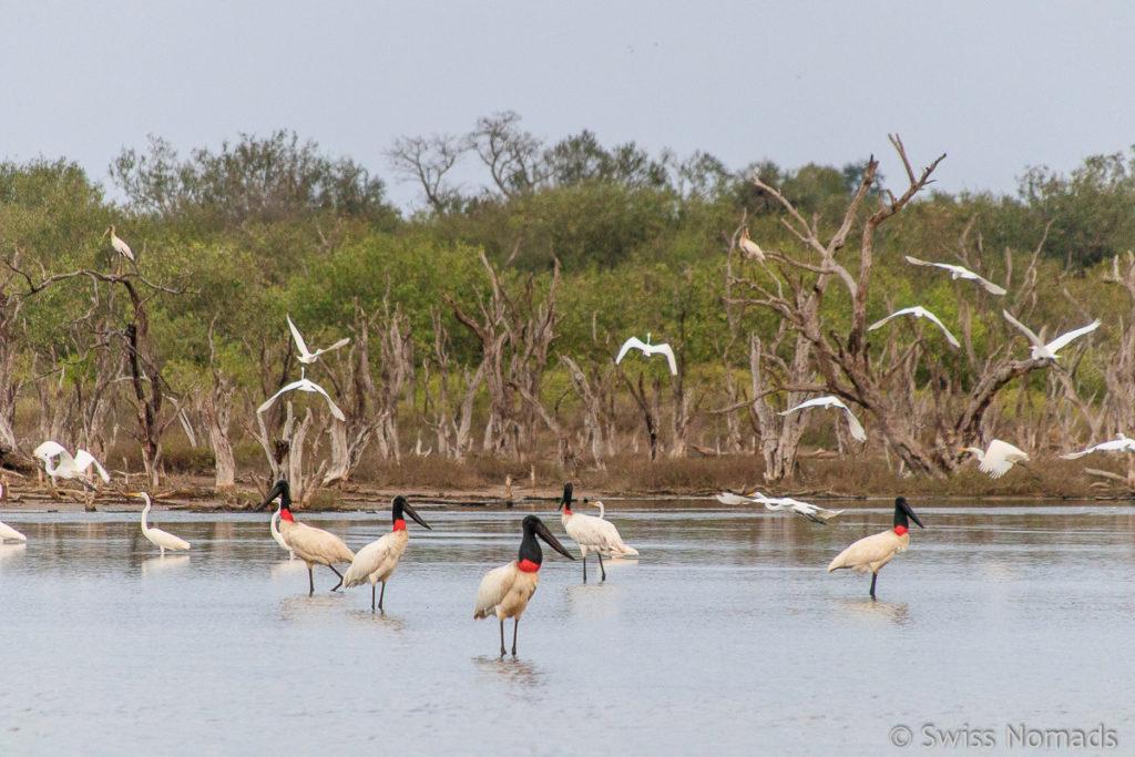 Vögel bei der sehenswerten Laguna Capitan