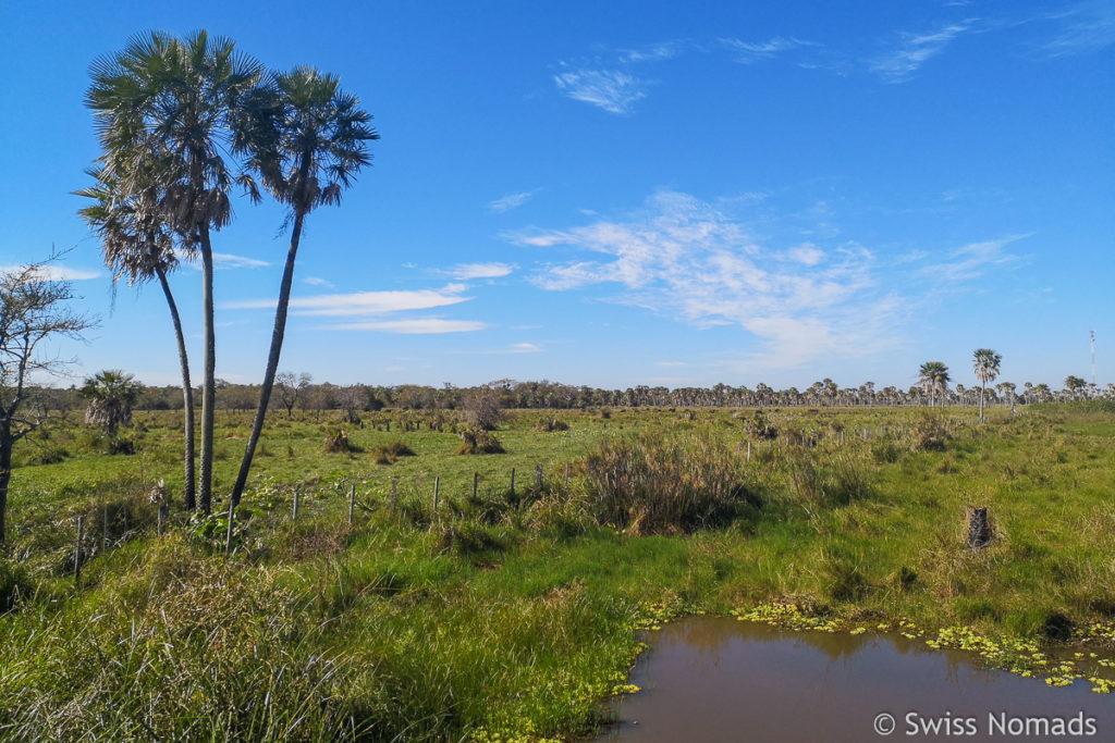 Landschaft des Gran Chaco in Paraguay