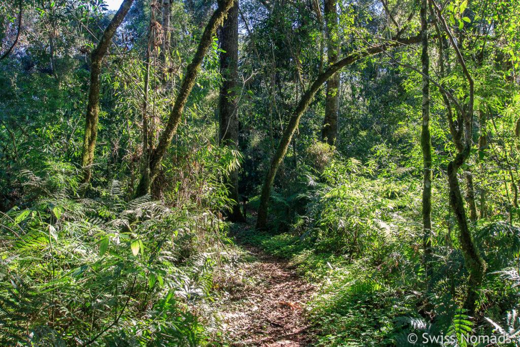 Wanderweg im San Rafael Schutzgebiet in Paraguay