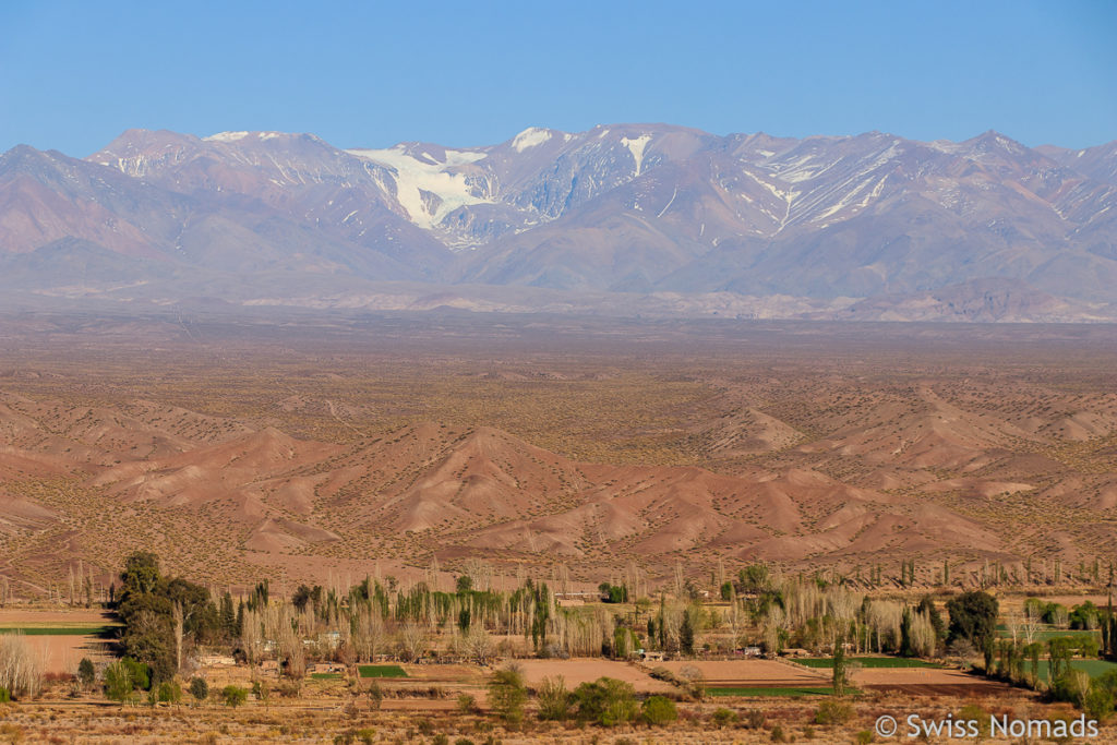 Anden bei Calingasta in Argentinien