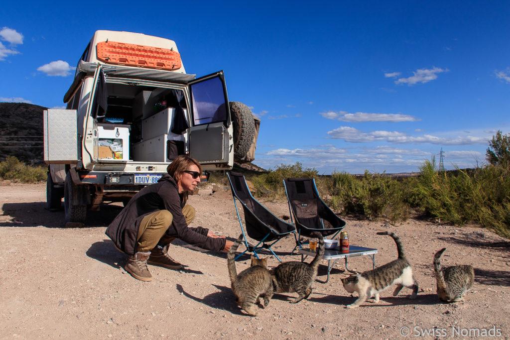 Katzen am Valle Grande
