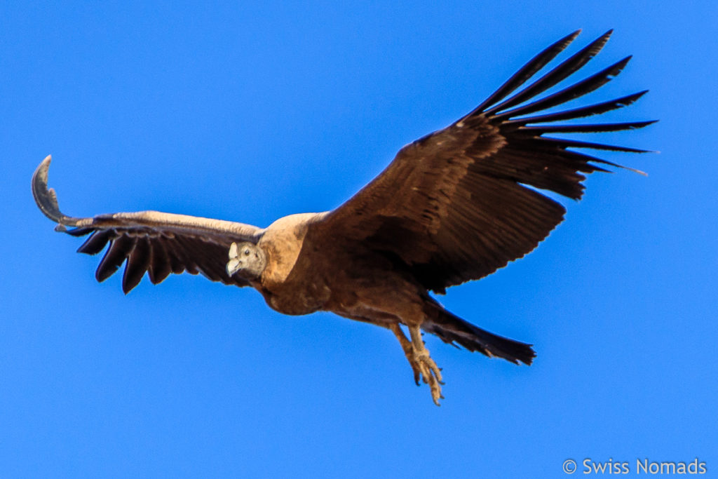 Kondor Atuel Canyon