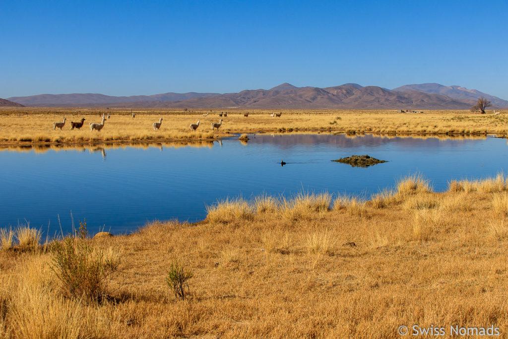 See in der Puna Argentinien