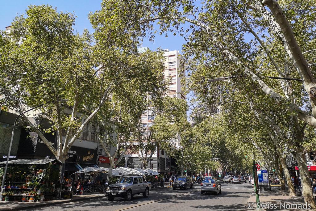 Typische Strasse in Mendoza