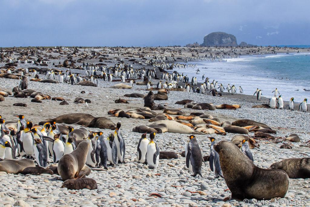 Faszination Antarktis