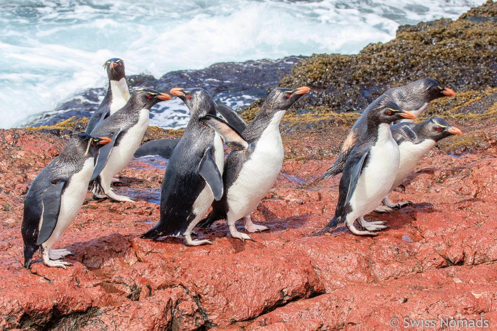 Felsen Pinguine Wasser
