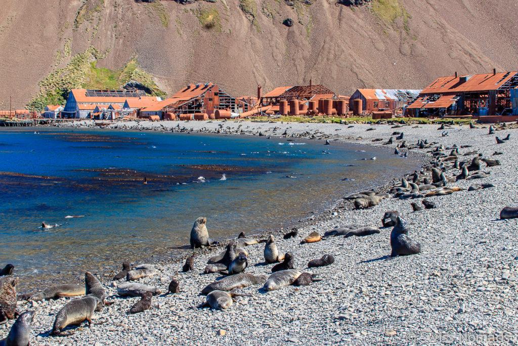 Strand auf Grytviken Südgeorgien