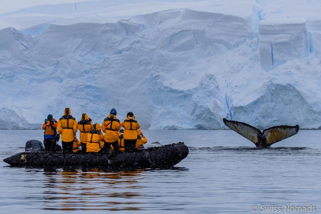 Wal und Eisberg in der Antarktis