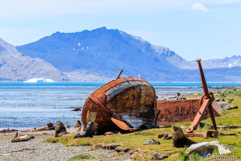 Wrack auf Grytviken Südgeorgien
