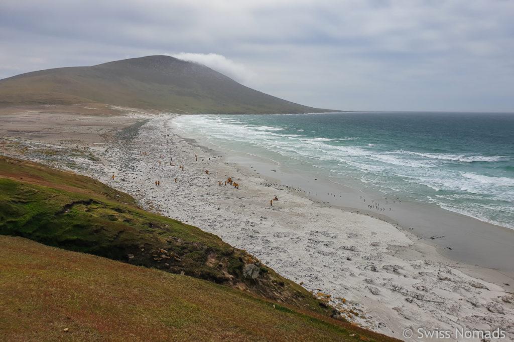 Strand auf Saunders Island