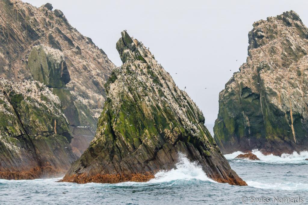 Shag Rocks in der Schottischen See